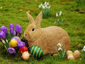 Rabbit, easter, eggs, crocuses