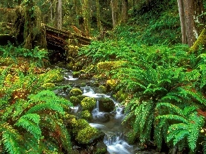 stream, forest, thicket, narrow, Green, Ferns, trees