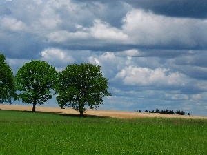 Field, clouds, viewes, Spring, trees