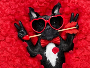 Funny, dog, Arrow, flakes, Glasses, French Bulldog