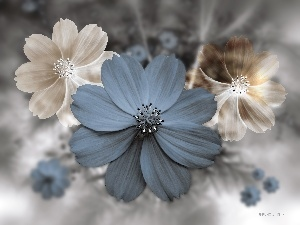 Cosmos, 3D Graphics, Flowers