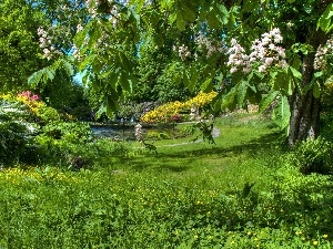 Garden, viewes, Flowers, trees