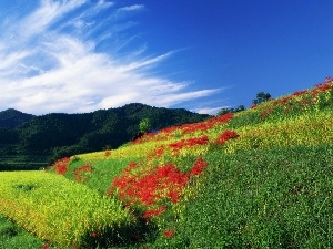 Mountains, Red, Flowers, Field