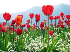 Flowers, Mountains, Tulips, White, Red