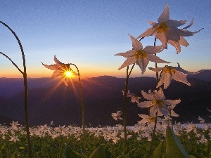 Mountains, sun, Flowers, rays