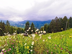 Mountains, Wildflowers, Flowers, woods