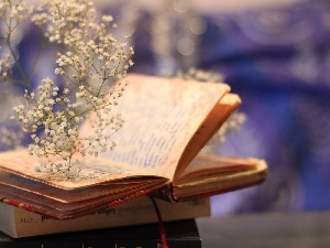 open, twig, Flowers, Book