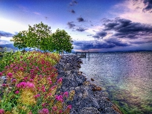 sea, coast, Flowers, stone