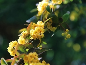 flowers, Bush, Yellow