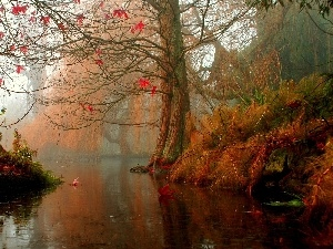 Fog, River, autumn