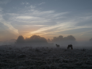viewes, Fog, bloodstock, trees, Meadow