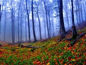 forest, Leaf, Fog, Autumn