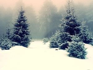 Fog, winter, trees, viewes, forest