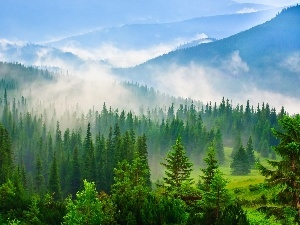Fog, Mountains, woods