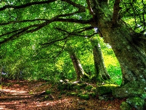 forest, Path, by