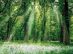 rays of the Sun, Meadow, forest