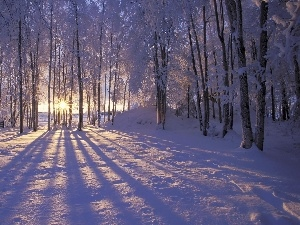rays of the Sun, winter, forest