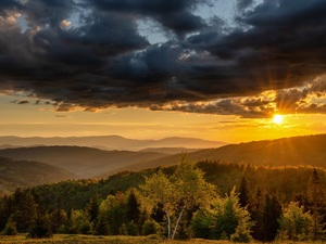 forest, Mountains, trees, viewes, Beskydy, Poland, Sunrise, clouds, Fog