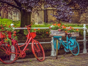 blue, Bikes, Flowers, Red, Two cars, boxes, geraniums