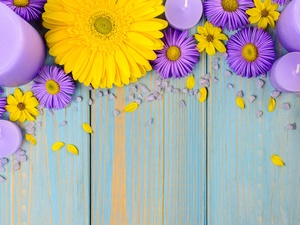 purple, Yellow, Candles, gerberas, Flowers, Astra, boarding