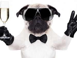 Glasses, dog, wine glass, Champagne, glove, pug