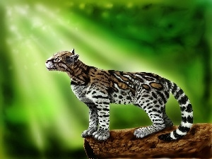 ocelot, light, graphics, rays