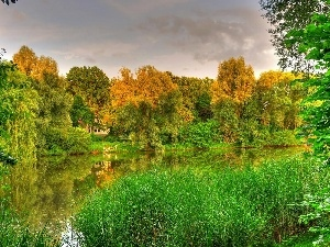 autumn, lake, grass, forest