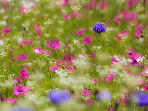 grass, Meadow, Flowers