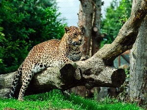 grass, Jaguar, Logs