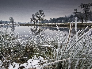 grass, winter, trees, viewes, River