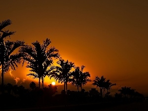 Great Sunsets, Palms