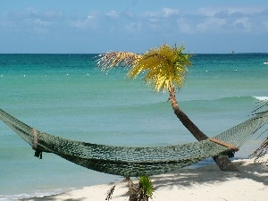 sea, Palm, Hammock, Beaches