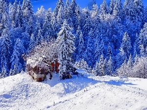 winter, small, Home, forest