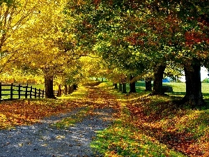 viewes, Autumn, Hurdle, Path, Field, trees