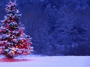christmas tree, winter, illuminated