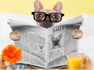 Paper, French Bulldog, cup, Glasses, dog, Flower, juice