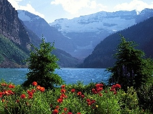 lake, papavers, Mountains