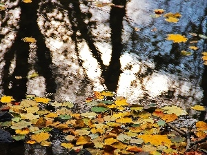 Leaf, autumn, reflection, Yellow, lake