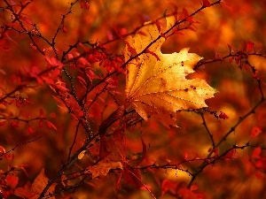 leaf, Autumn, Bush, dry, Red
