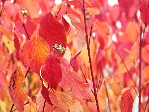 Leaf, Red, Autumn