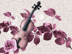 instruments, rose, Leaf, violin
