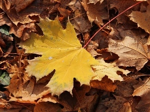 Yellow, dry, Leaf, leaf