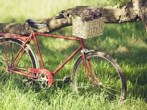 Bike, basket, Lilacs, Meadow