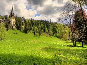 Castle, hill, Meadow, an