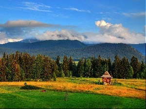 forest, clouds, Meadow, Mountains