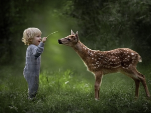 Meadow, forest, boy, deer, Kid
