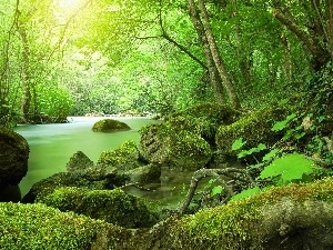 viewes, River, Moss, green, Stones, trees