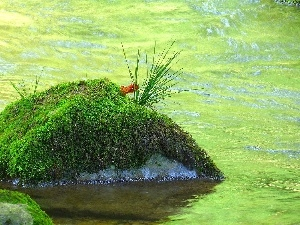 Moss, River, Stone