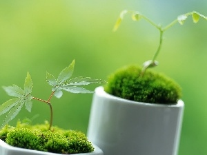 Moss, seedlings, tea