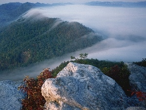 Fog, rocks, Mountains, forest